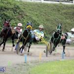 Harness Pony Racing Bermuda (3)