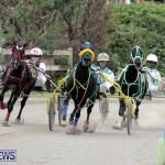 Harness Pony Racing Bermuda (4)