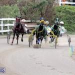 Harness Pony Racing Bermuda (5)