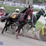 Harness Pony Racing Bermuda (7)