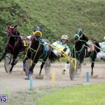 Harness Pony Racing Bermuda (9)