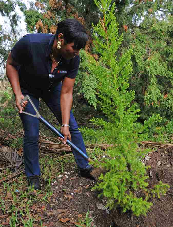Press Release - Clarien WindReach Reforestation Project Photos (2)