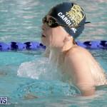 swimming Bermuda (13)
