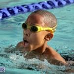 swimming Bermuda (14)
