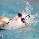 swimming Bermuda (2)