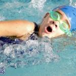swimming Bermuda (4)