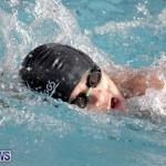 swimming Bermuda (8)