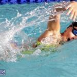 swimming Bermuda (9)