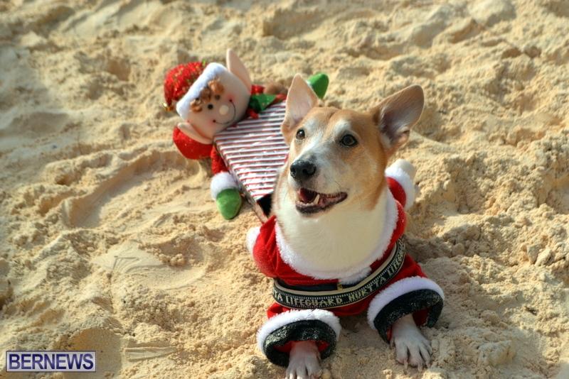 Bermuda-Christmas-at-Elbow-Beach-2014-15