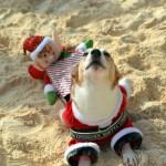 Bermuda Christmas at Elbow Beach 2014 (16)