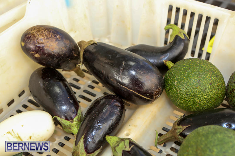 Farmers-Market-Bermuda-December-6-2014-55