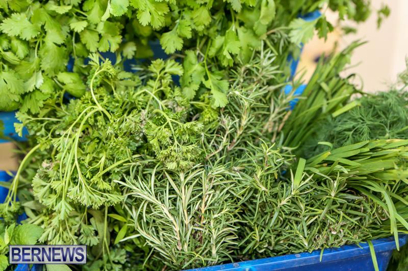 Farmers-Market-Bermuda-December-6-2014-56