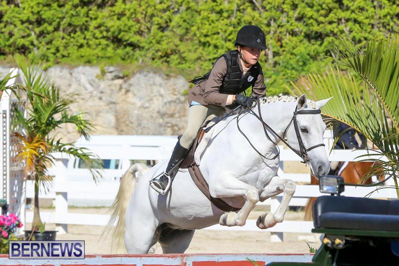 Horse-Show-Bermuda-December-13-2014-1