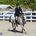 Horse Show Bermuda, December 13 2014-10