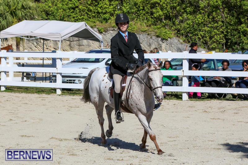 Horse-Show-Bermuda-December-13-2014-10