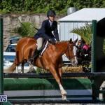 Horse Show Bermuda, December 13 2014-11