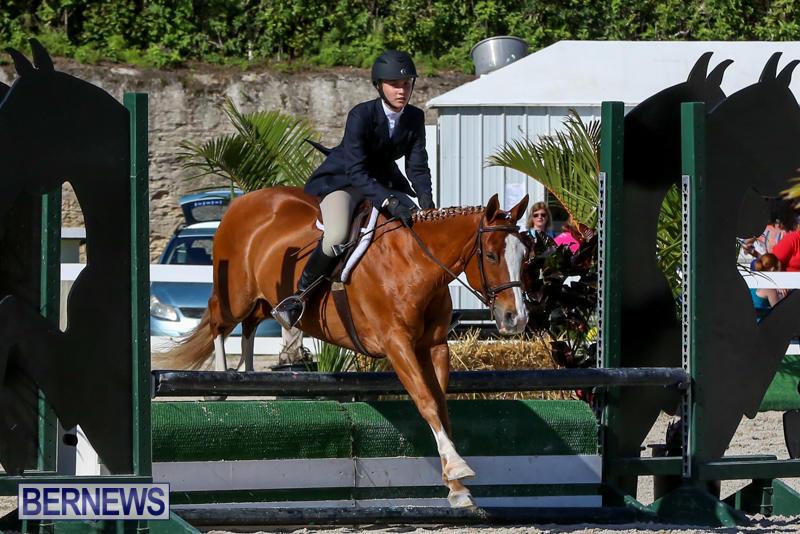Horse-Show-Bermuda-December-13-2014-11