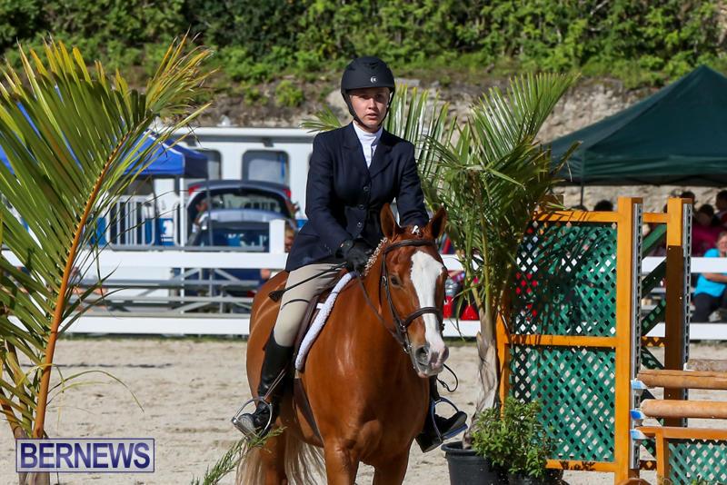 Horse-Show-Bermuda-December-13-2014-12