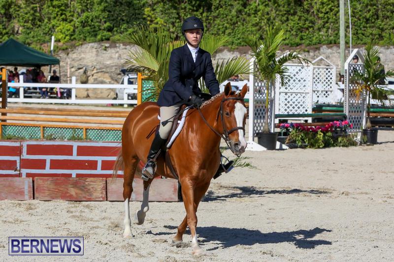 Horse-Show-Bermuda-December-13-2014-14