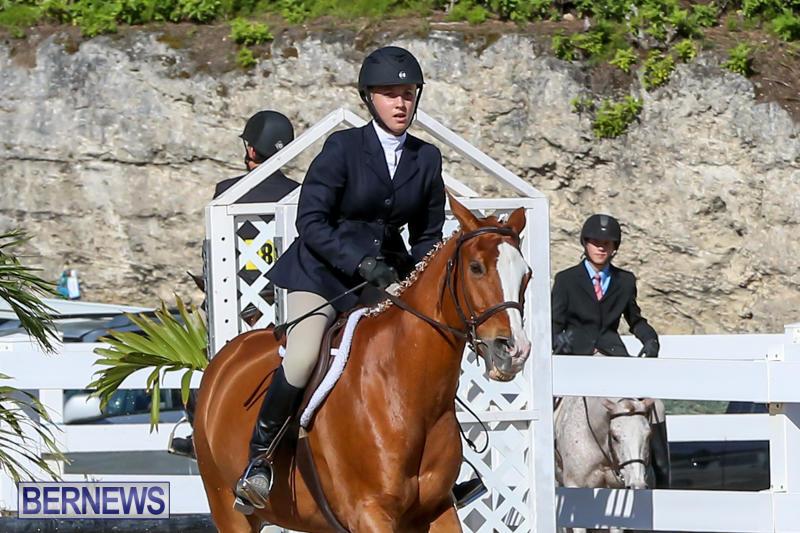 Horse-Show-Bermuda-December-13-2014-15