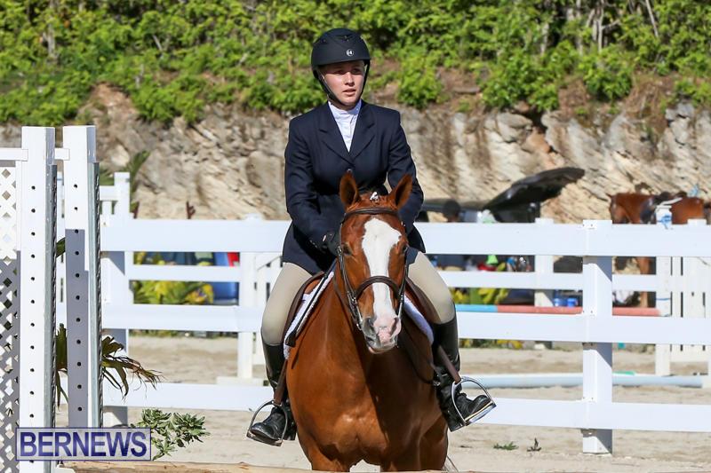 Horse-Show-Bermuda-December-13-2014-16