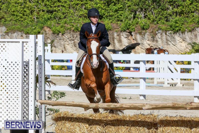 Horse-Show-Bermuda-December-13-2014-17