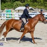 Horse Show Bermuda, December 13 2014-18