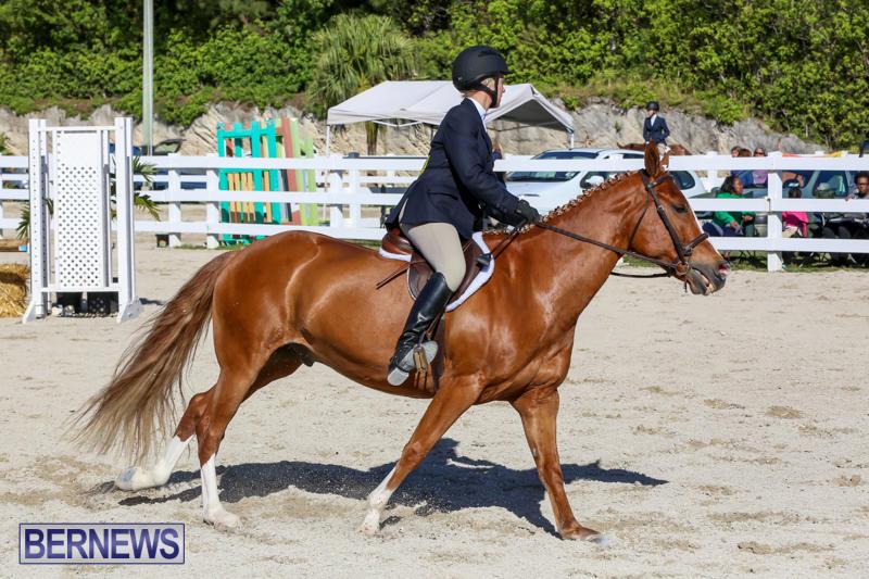 Horse-Show-Bermuda-December-13-2014-18