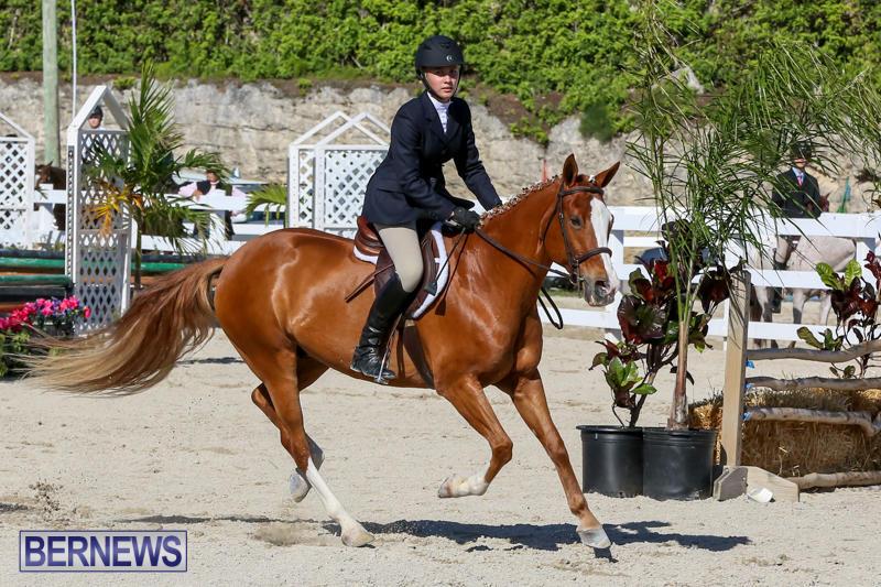 Horse-Show-Bermuda-December-13-2014-19