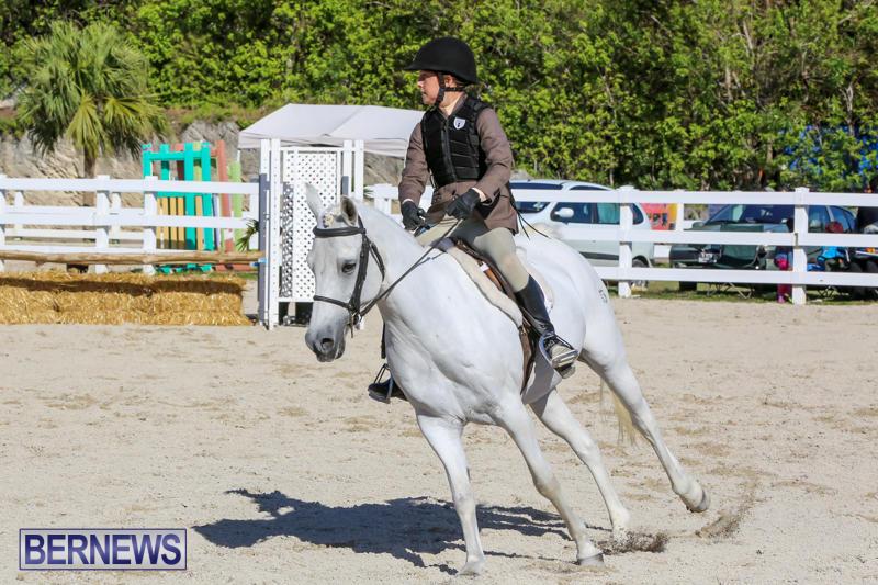 Horse-Show-Bermuda-December-13-2014-2