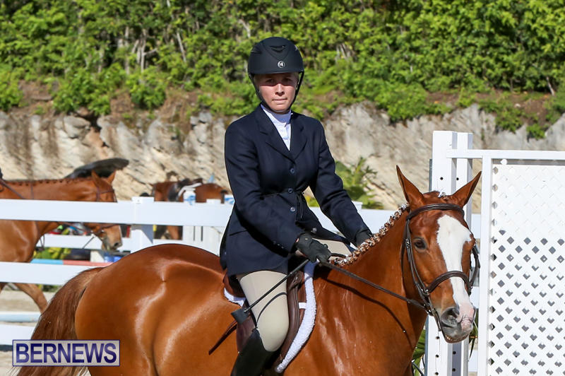 Horse-Show-Bermuda-December-13-2014-20