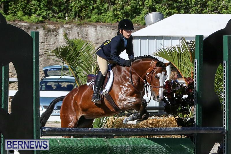 Horse-Show-Bermuda-December-13-2014-21