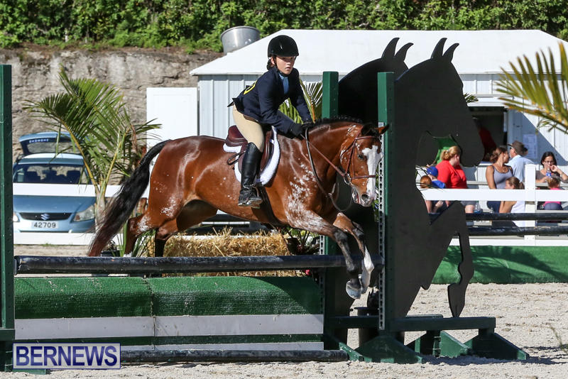 Horse-Show-Bermuda-December-13-2014-22