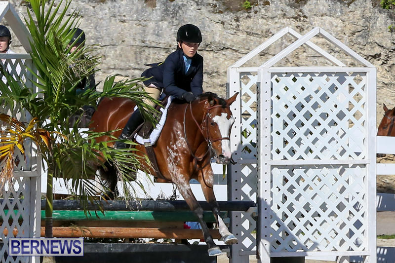 Horse-Show-Bermuda-December-13-2014-25