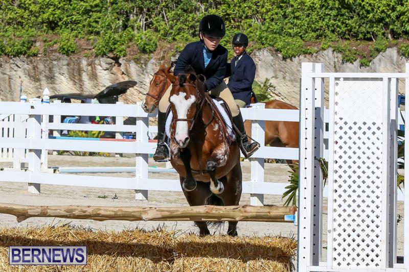 Horse-Show-Bermuda-December-13-2014-27