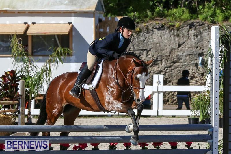 Horse-Show-Bermuda-December-13-2014-28