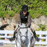 Horse Show Bermuda, December 13 2014-3