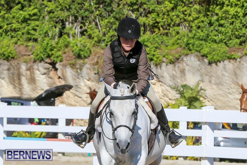 Horse-Show-Bermuda-December-13-2014-3