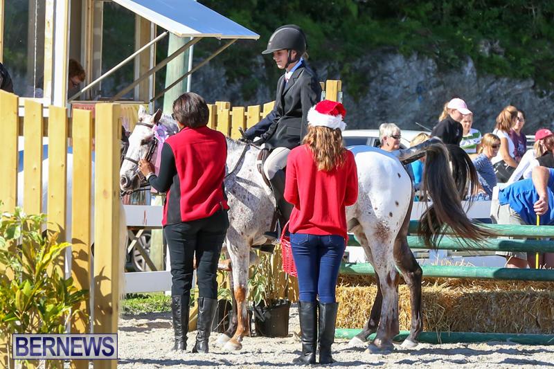 Horse-Show-Bermuda-December-13-2014-30