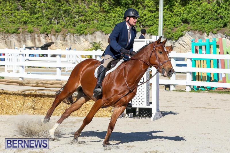 Horse-Show-Bermuda-December-13-2014-35
