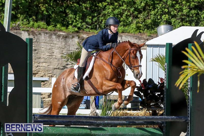 Horse-Show-Bermuda-December-13-2014-37