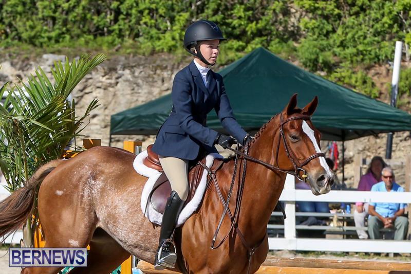 Horse-Show-Bermuda-December-13-2014-38