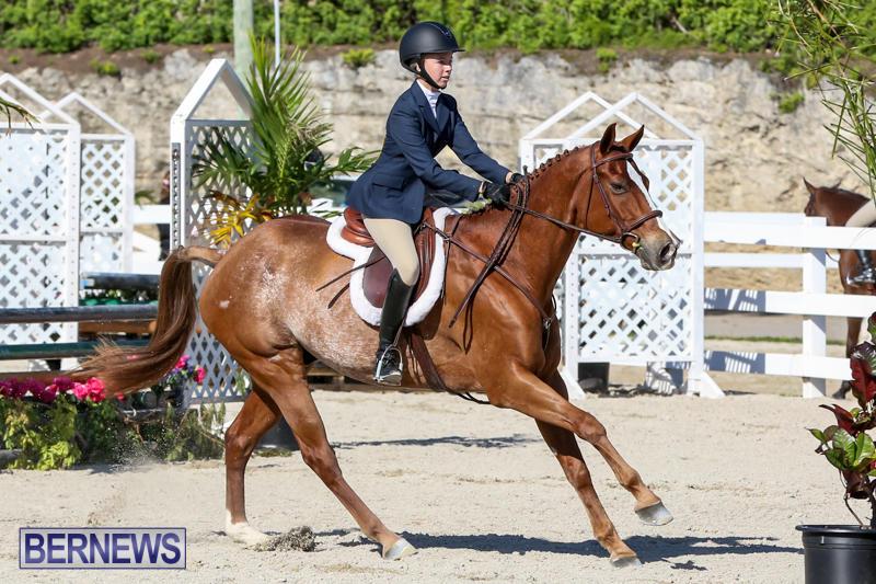 Horse-Show-Bermuda-December-13-2014-39
