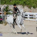 Horse Show Bermuda, December 13 2014-4