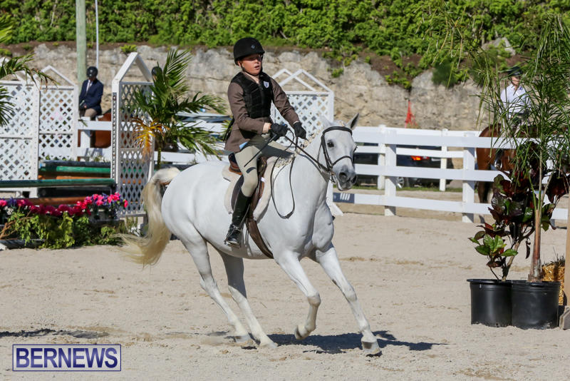 Horse-Show-Bermuda-December-13-2014-4