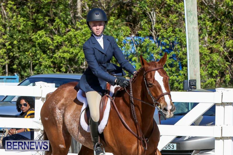 Horse-Show-Bermuda-December-13-2014-40