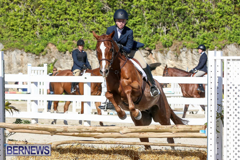 Horse-Show-Bermuda-December-13-2014-42