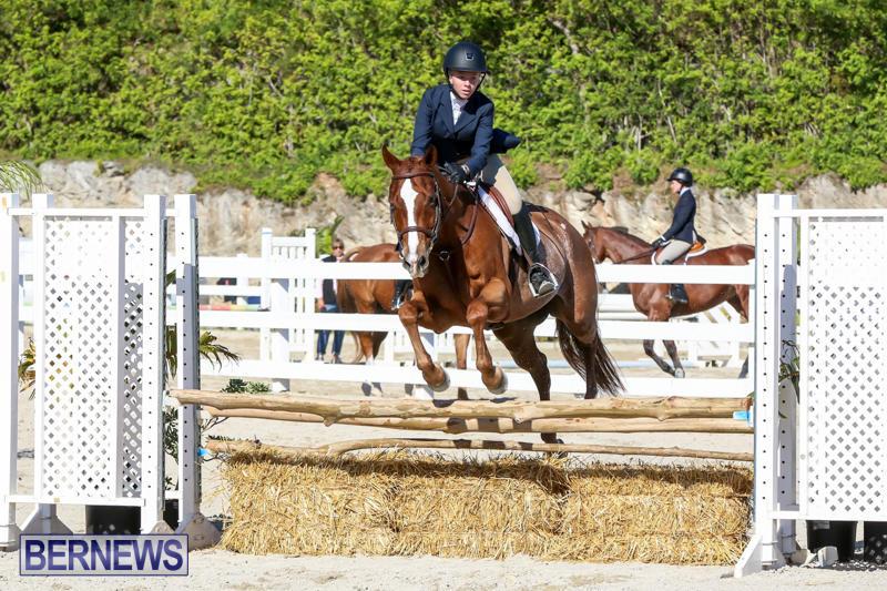 Horse-Show-Bermuda-December-13-2014-43