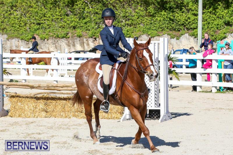 Horse-Show-Bermuda-December-13-2014-44