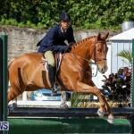 Horse Show Bermuda, December 13 2014-45